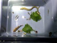 海水魚採集 in 福井