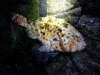 海水魚採集 in 和歌山