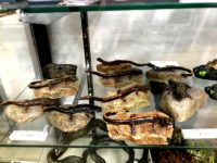 「カエル工房」のクオリティーがすごい件