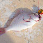 美味しい魚続出!鯛ラバfishing!