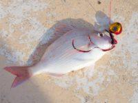 【美味しい魚続出!】鯛ラバfishing!
