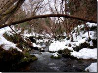 真冬のサンショウウオ観察 ~極寒の沢登り~