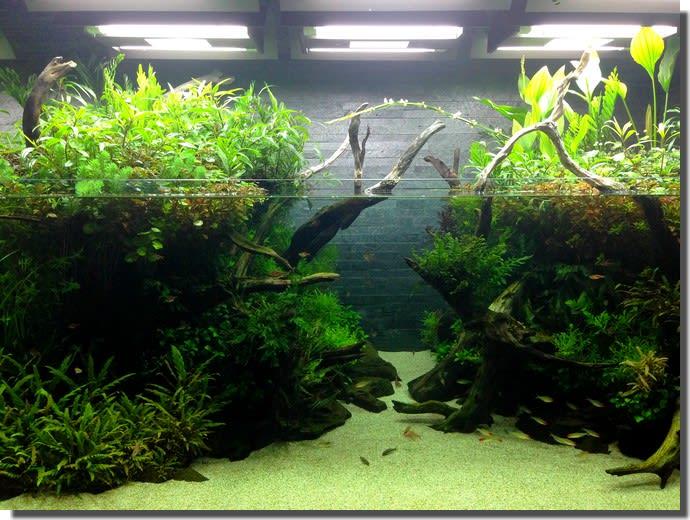 水族館と自然下の生き物について思うこと