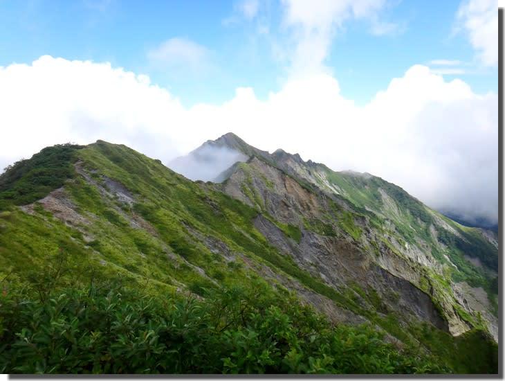 大山登山しながらサンショウウオ観察がしたい