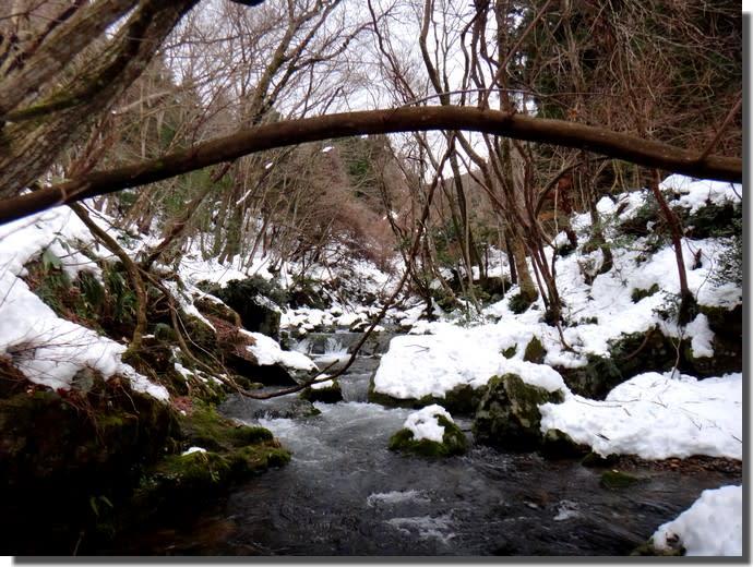 【命の危険?】極寒!真冬のサンショウウオ観察